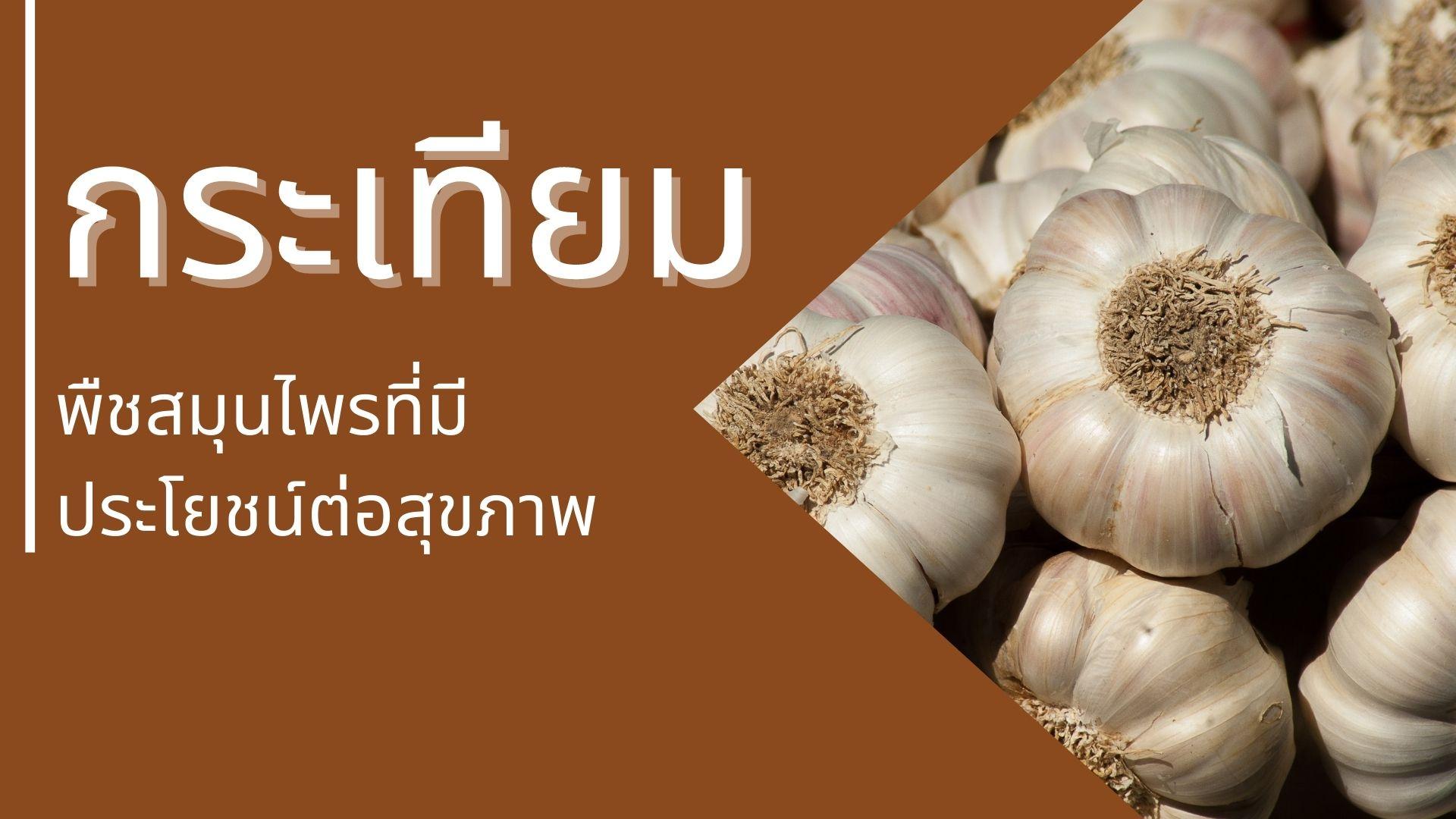 กระเทียม พืชสมุนไพรที่มีประโยชน์ต่อสุขภาพ